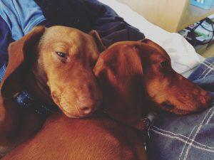 Romeo och Jussi
