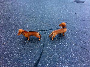Romeo och Jussi är goda vänner